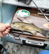 060714smallmouth_1
