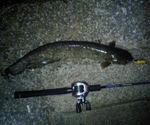 080613catfish2
