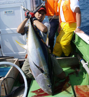 080910yellowfin1_3