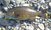 110308smallmouth2