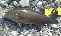 110308smallmouth4