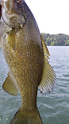 120603smallmouth1_5